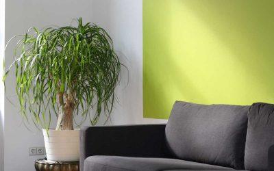 Katalytische Innenfarben für saubere Luft